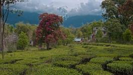 ಪಾಲಂಪೂರ್
