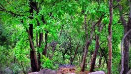 കര്ണാല