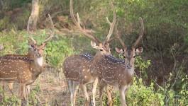ಬಂಡೀಪುರ