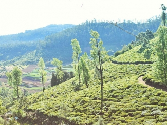 Coorg Tourism, Travel Guide & Tourist Places in Coorg