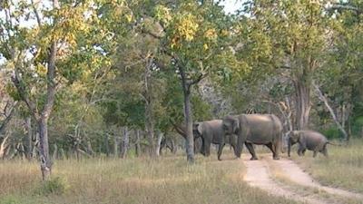बांदीपुर  नेशनल पार्क
