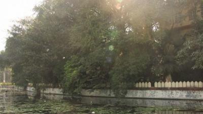 സരസ് ബാഗ്