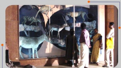 प्राकृतिक इतिहास का क्षेत्रिय संग्रहालय