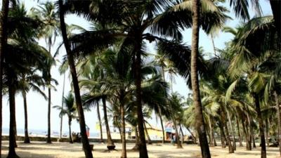 కోల్వా