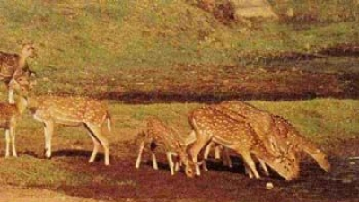 దర్రా వన్యప్రాణి అభయారణ్యం