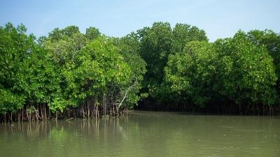 ಪಿಚವರಂ ಮ್ಯಾಂಗ್ರೋವ್ ಅರಣ್ಯ