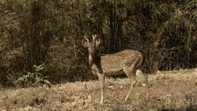 बांधवगढ़ नेशनल पार्क