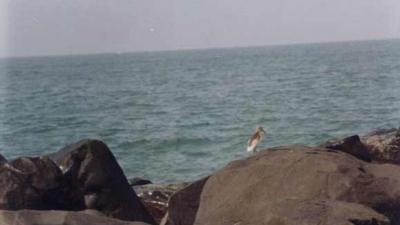பைந்தூர் கடற்கரை