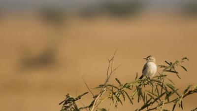 बन्नी घास के मैदान