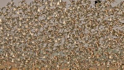 मंगलाजोड़ी पक्षी अभयारण्य