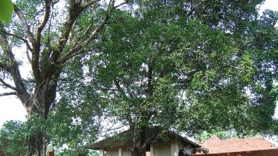 ಪಾಪಿನ್ನಿಸಿರಿ