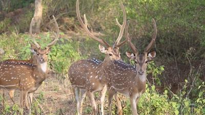 బండిపూర్