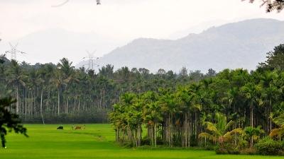 சுல்தான் பத்தேரி