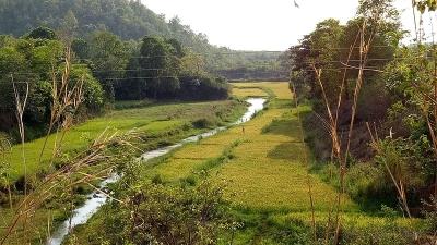 ஜெய்பூர் (ஒடிசா)