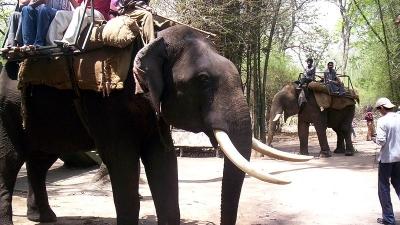 हाथी सफारी