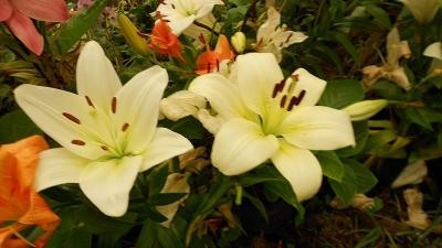 बुरांश का फूल