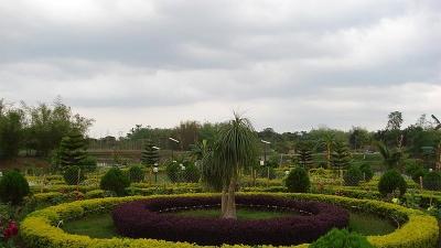 बोंगाउरी