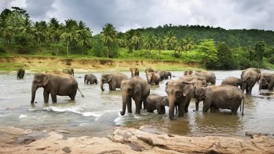 കമേങ് ആന സംരക്ഷണ കേന്ദ്രം