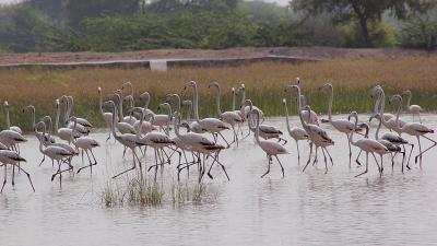 ഗുഡ ബിഷ്ണോയി ഗ്രാമം
