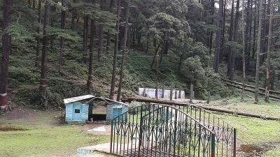 ஜங்கிள் சஃபாரி