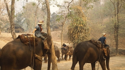 Theppakadu Elephant Camp