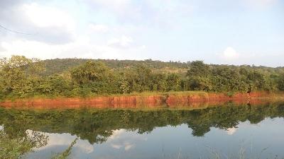 नल्लामाला जंगल