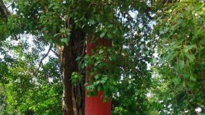 राष्ट्रीय वन चेतना केन्द्र