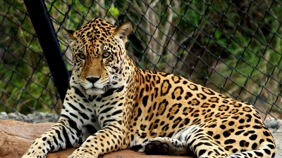 श्री वेंकटेश्वर प्राणी उद्यान