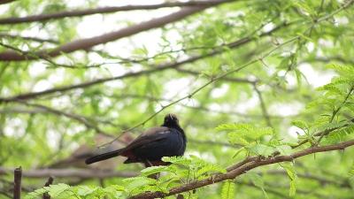 பிந்தாவாஸ் பறவைகள் சரணாலயம்