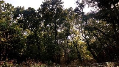 கலெஸர் வனவிலங்கு சரணாலயம்