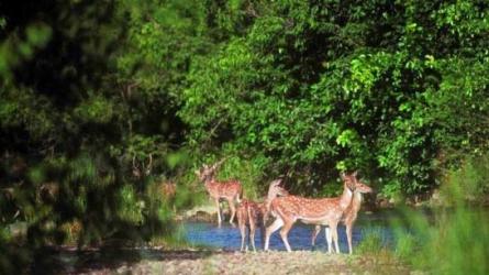 பர்டா மலை வனவிலங்குகள் சரணாலயம்