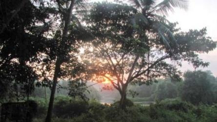 கலிபொயிக்கா