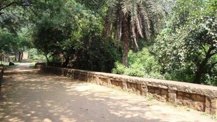 दिल्ली रिज