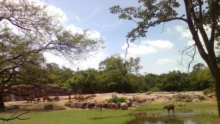 नेहरू जूलॉजीकल पार्क