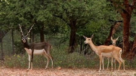 महावीर हरिना वनस्थली नेशनल पार्क