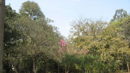 കബ്ബണ് പാര്ക്ക്