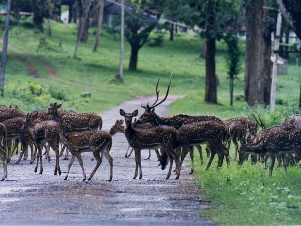 Nagarhole photos, Nagarhole National Park - A Road By the National Park