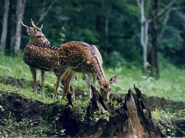Nagarhole photos, Nagarhole National Park - Deers Enjoying Themselves