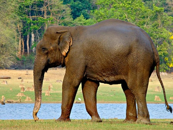 Nagarhole photos, Nagarhole National Park - An Elephant Lazing Around