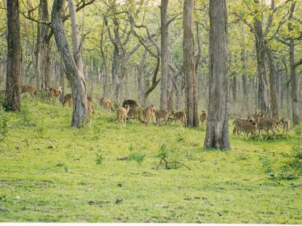 Bandipur photos, Bandipur National Park - Deer