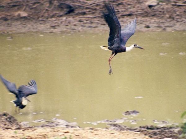 Bandipur photos, Bandipur National Park - Birds In A Lake