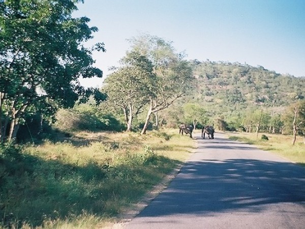 Bandipur photos, Bandipur National Park - A Pathway WIthin