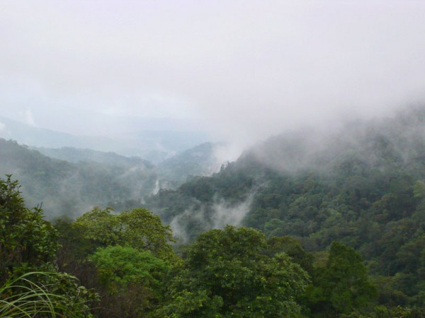 Coorg photos, Brahmagiri Wildlife Sanctuary - An Aesthetic View