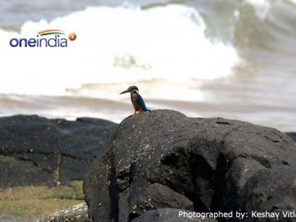 Gokarna photos, Kudle Beach - A Little Bird On Rock