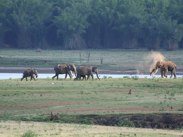 Kabini Photos - Elephants On The River Bank