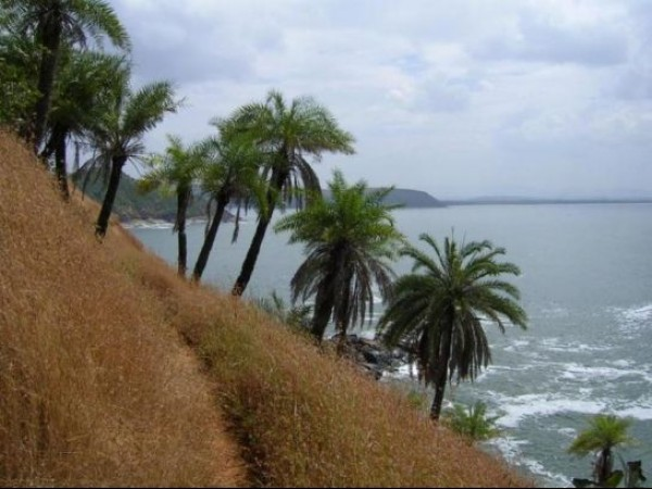 Gokarna photos, Half Moon Beach - Palm Trees On The Port