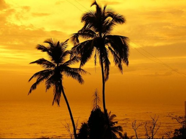 Mumbai photos, Bandstand - Palms