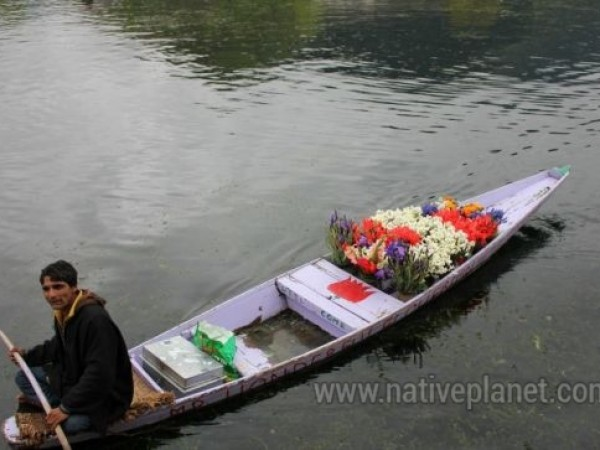 Srinagar photos, Dal Lake - Beautiful Blooms
