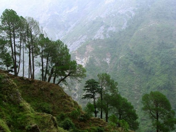 Dharmashala photos, Triund - Tree Line Towards Triund Park
