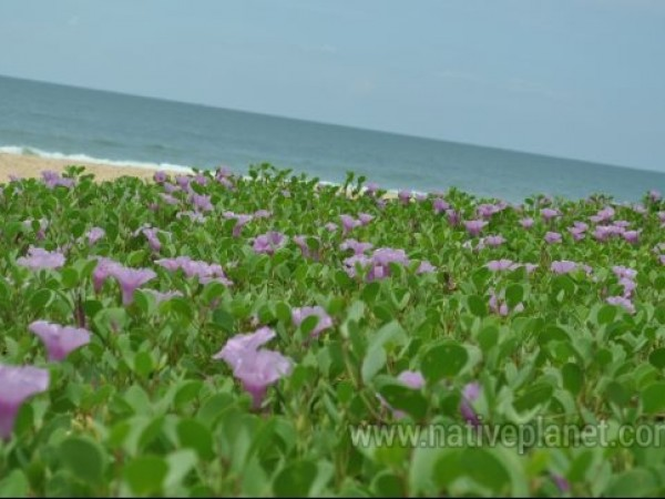 Udupi photos, Padubidri - Maha Ganapathi Temple - Beach View